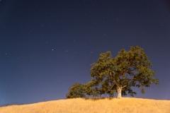 Starry-Oak_20x30